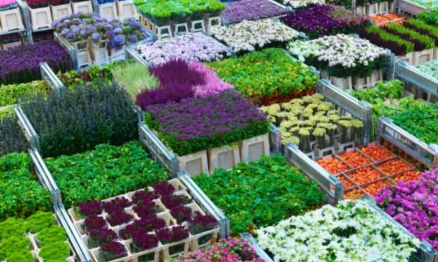 Covid-19. European sector of flower & live plant lost 4,12 billion euro in March and April 2020