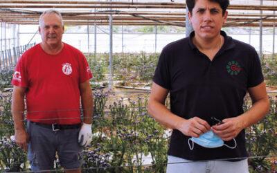 Interview Juan Maravillas  (Canaraflor) in Flormarket Global