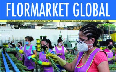 Summary Flormarket Global 107